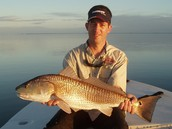 Large Red Drum