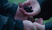 Poison Nightlock berries
