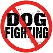 How to stop dog fighting