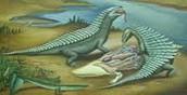 Aetosaurs