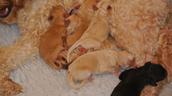 Willow had 7 puppies last week!!!