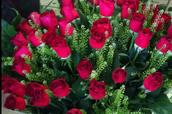 עד כמה הפרחים מעצבנים
