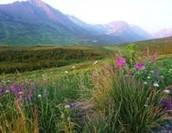 Summer's in Alaska