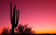the cactus 2
