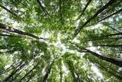 Tree Biotechnology (forest biotech.)