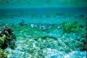 Monk Seal Habitat