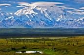 Tundra Facts