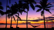 Can you just imagine yourself sitting under one of these palm trees and enjoying the view?