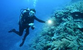 Sylvia Earle is touching a coral reef