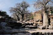 Original Habitat: Mali