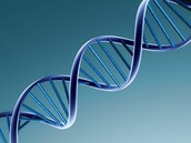 Role of DNA in Biotechnology