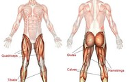 Muscles used while doing a squat