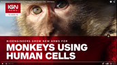 Monkeys using human cells