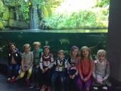 1d - Aquarium field trip