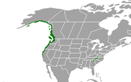 North American Temperate Rainforests