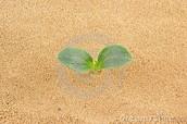 Plans on sand