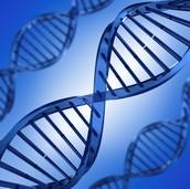 The human gene