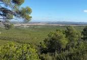Bosque mediterráneo o bosque perinnifolio: