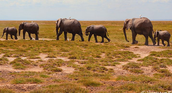 This is an image of the elephants at the start of their adventure [mommy  and baby].