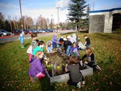K/1 working together to harvesting the front garden
