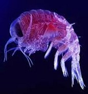 This is a Plankton