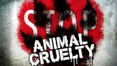 """""""It is a fact that a person who is cruel to animals is more likely to exhibit brutality towards humans"""""""