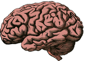 Decreased Cognitive Function & Growth