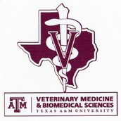 Top Vet Schools in the U.S.