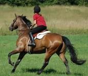 He montado a caballo.