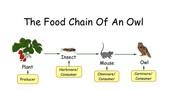 Food Chain!!