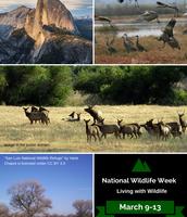 National Wildlife Week