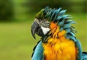 Contact Mr. Macaw on the web!