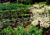 Critical Aspects Of permaculture design - The Options