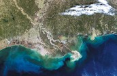 What are Dead Zones in the Gulf of Mexico?  What causes this situation? What can be done to help stop them?
