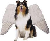 A dog that has wings.