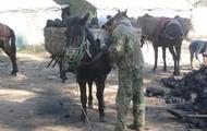 Military Horse