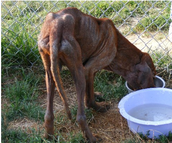 Step#2 Report Animal Abuse