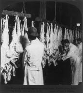 Washing and tagging freshly killed lamb, 1906