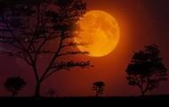 """the orange-blossom moon""(15)"