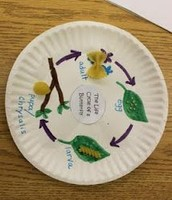 Activity #3- The Life Cycle of a Butterfly
