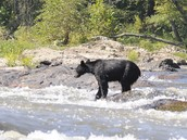 Black Bear (land)
