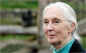 Introduction To Jane Goodall