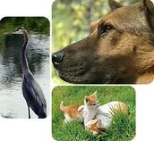 Animal Managements: Gage