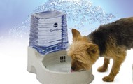 Dog Bowl With Purifier