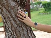 Juego de anillo y pulsera