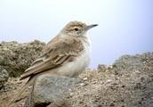 Bird that lives in the desert