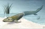 Amphibious tetrapods