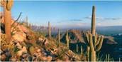 Desert of Mexico