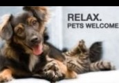 We are pet friendly!