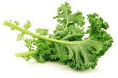 What is kale?